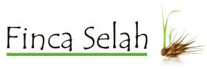 selah logo